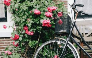 Read more about the article Alles andere als kitschig – Rote Rosen wirbt für Radentscheid